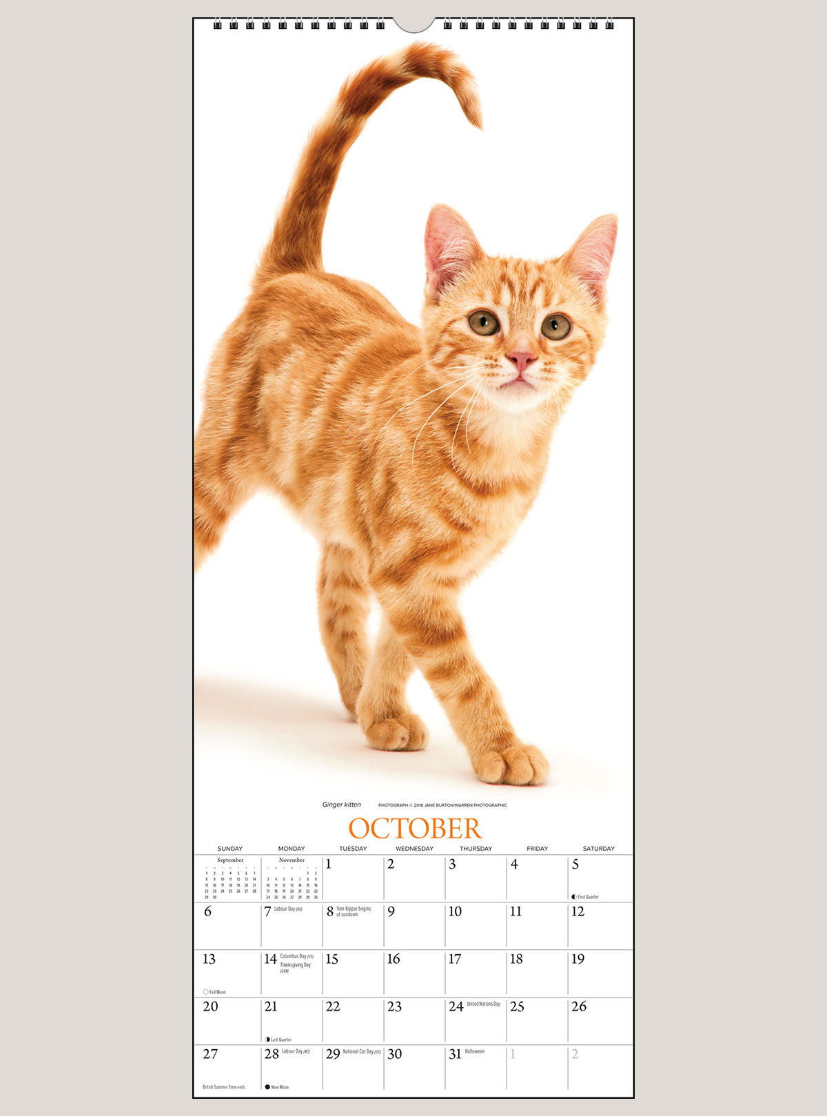 "2019 Cats 9"" x 22"" VERTICAL WALL CALENDAR"