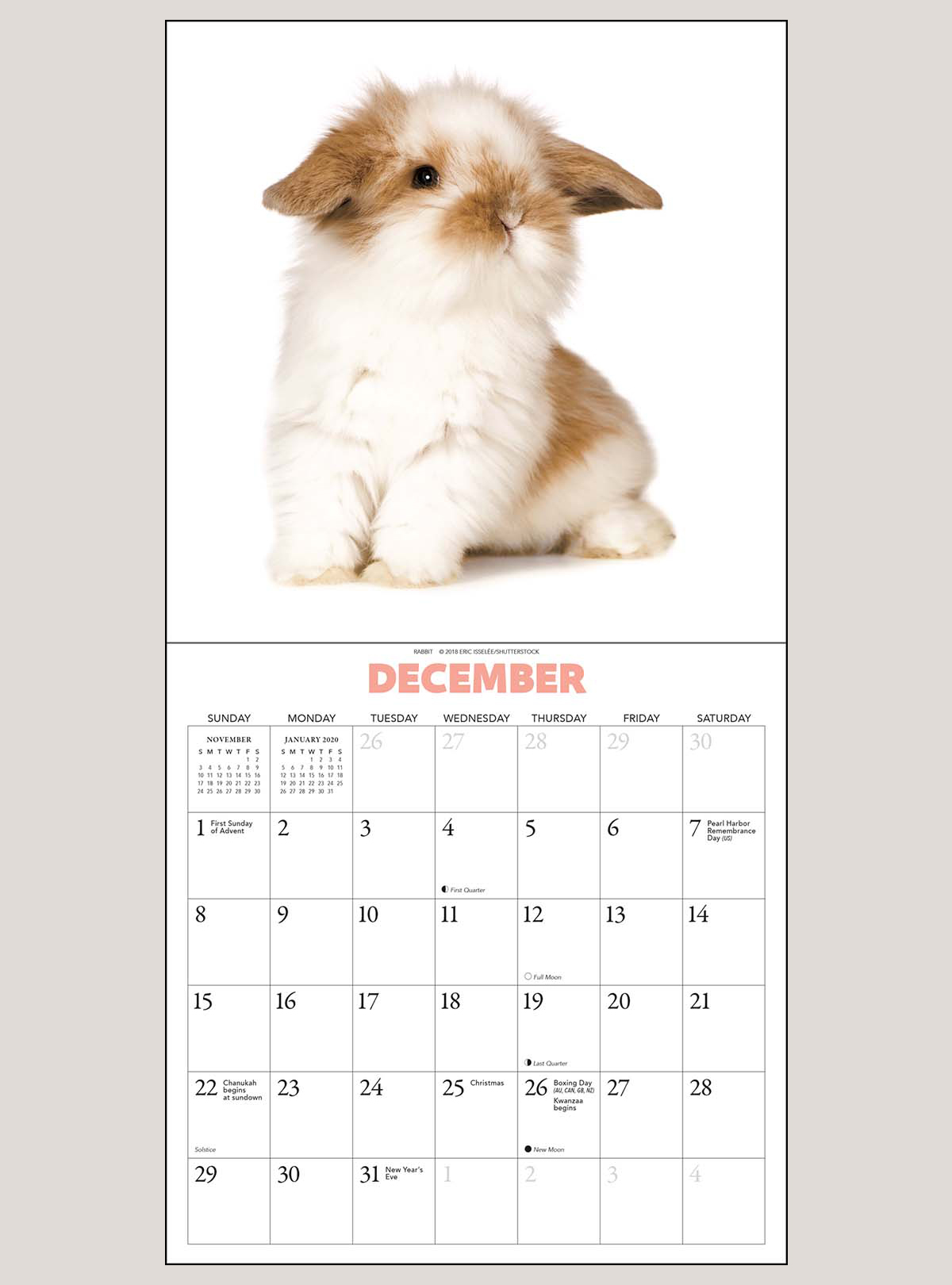 "2019 Newbies 7"" x 7"" MINI WALL CALENDAR"