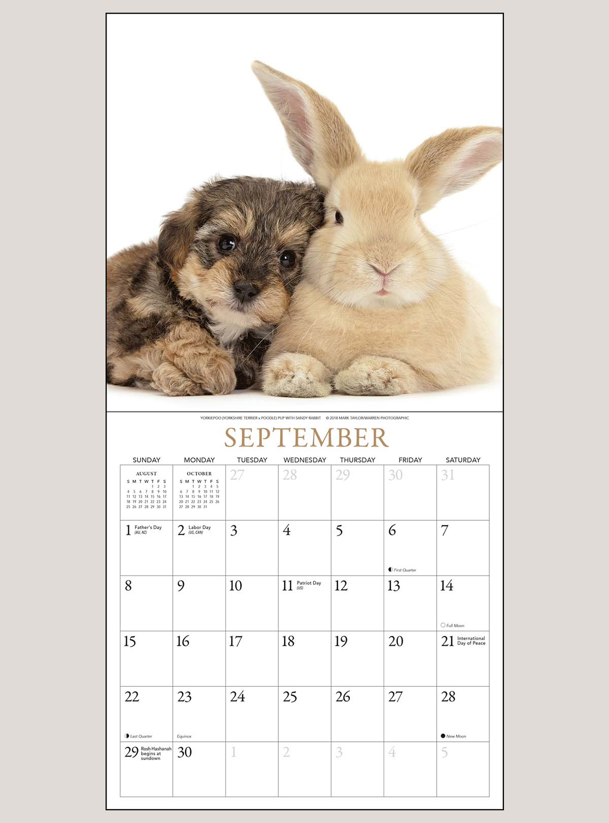 "2019 Puppies & Friends 7"" x 7"" MINI WALL CALENDAR"