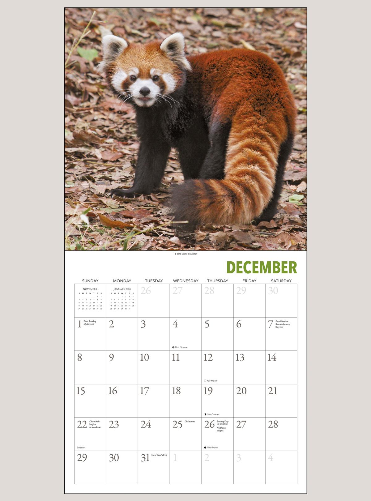 """2019 Red Pandas 12"""" x 12"""" WALL CALENDAR"""