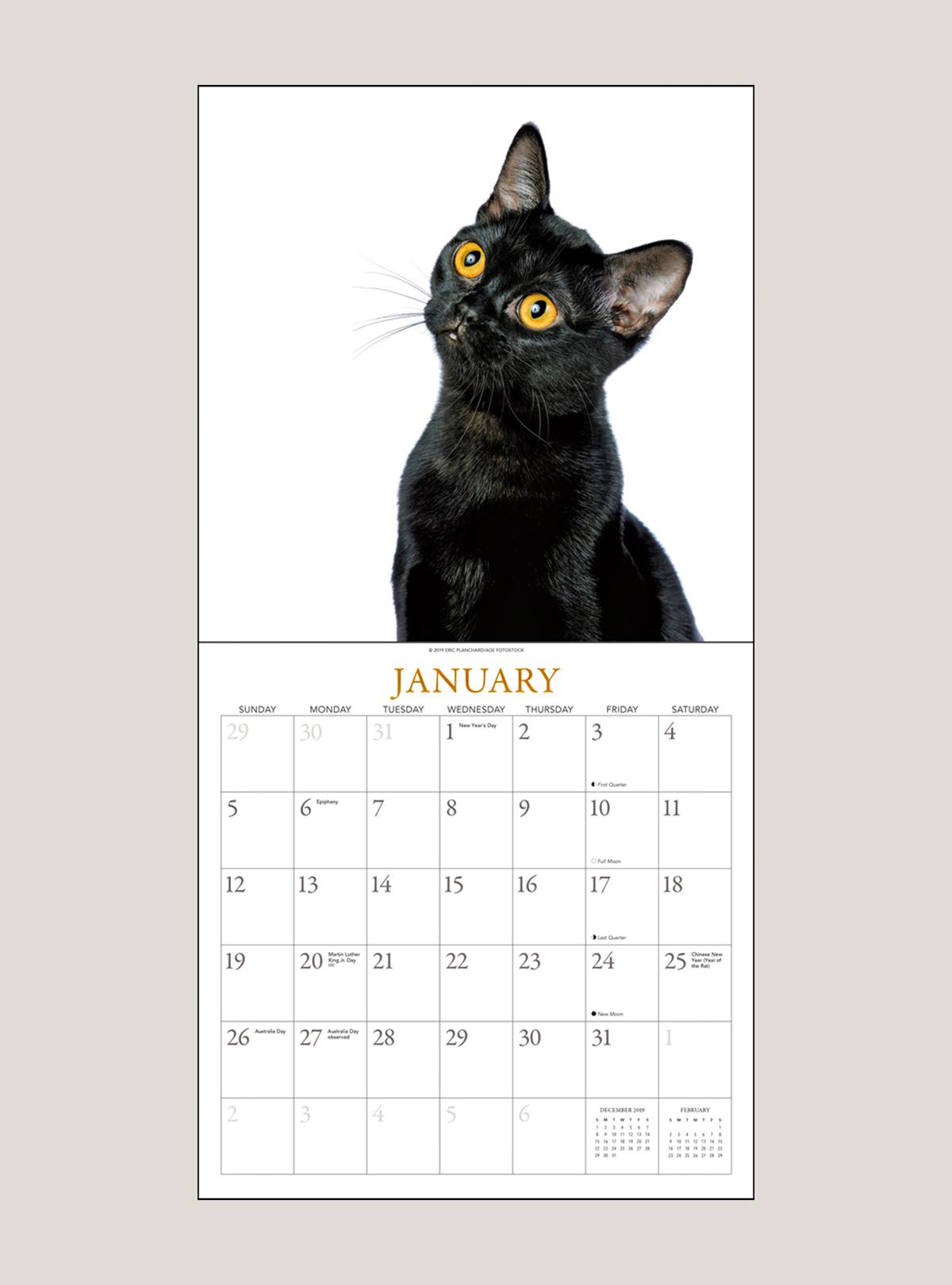 "2020 Black Cats on White 12"" x 12"" WALL CALENDAR"