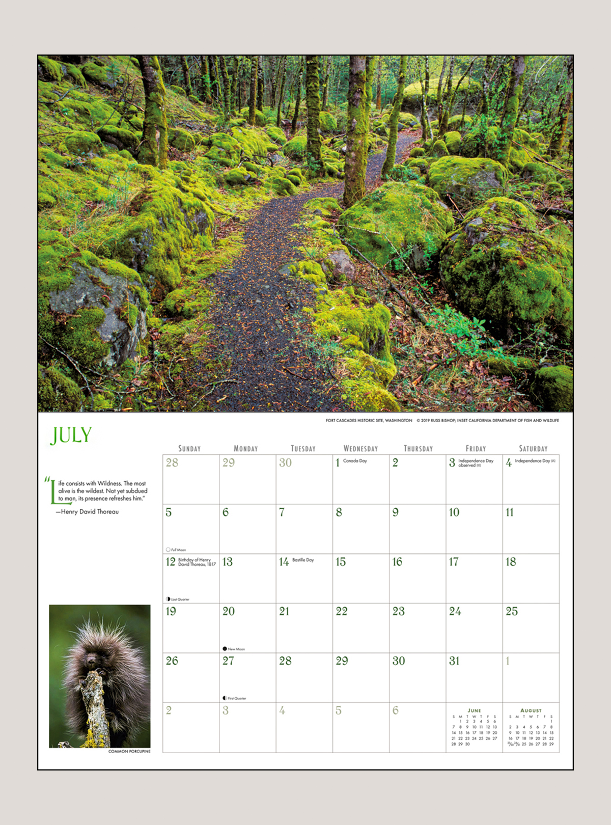 "2020 Into the Woods 18"" x 12"" DELUXE WALL CALENDAR"
