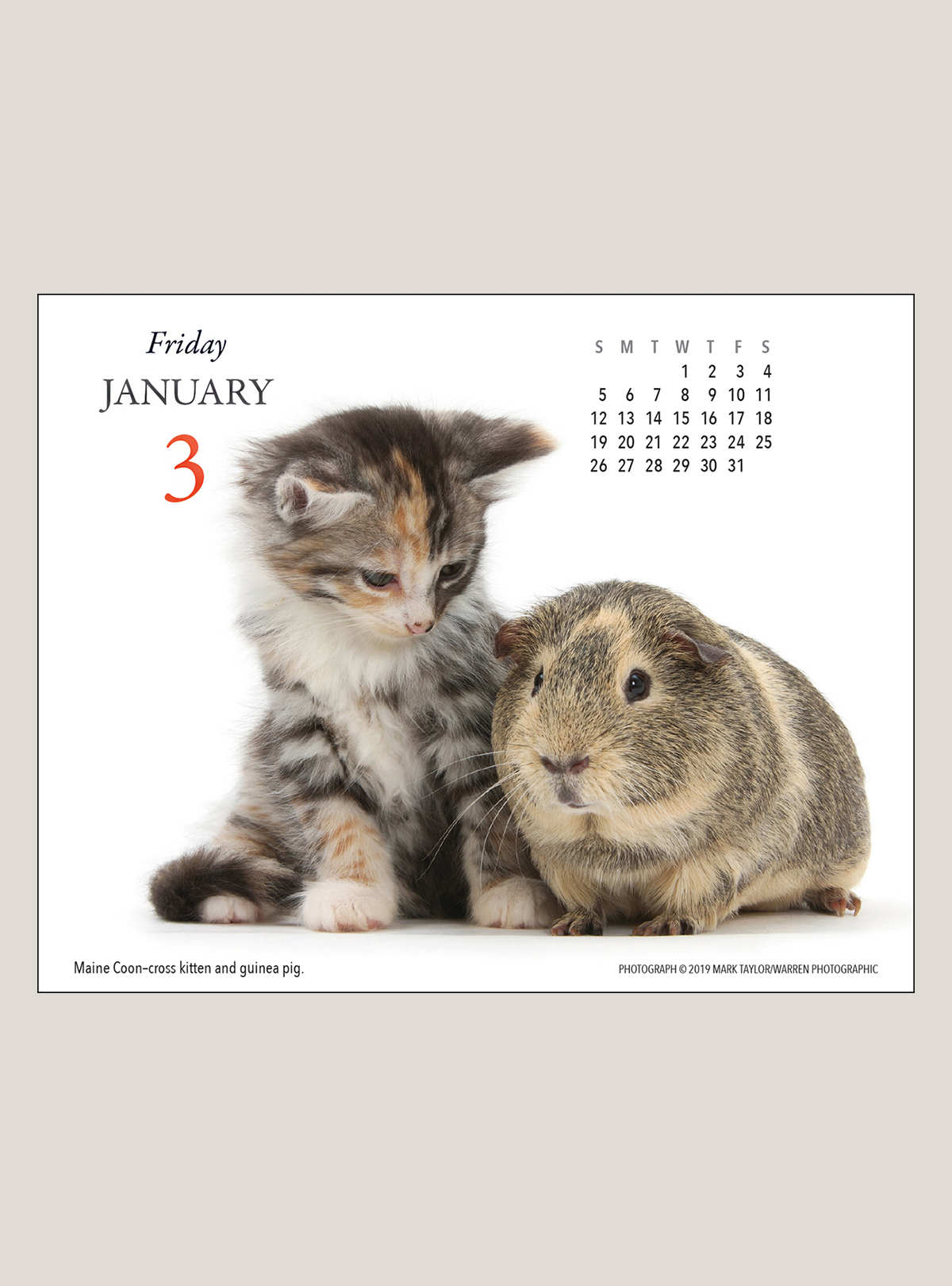 "2020 Kittens & Friends 5.25"" x 4.25"" PAGE PER DAY CALENDAR"