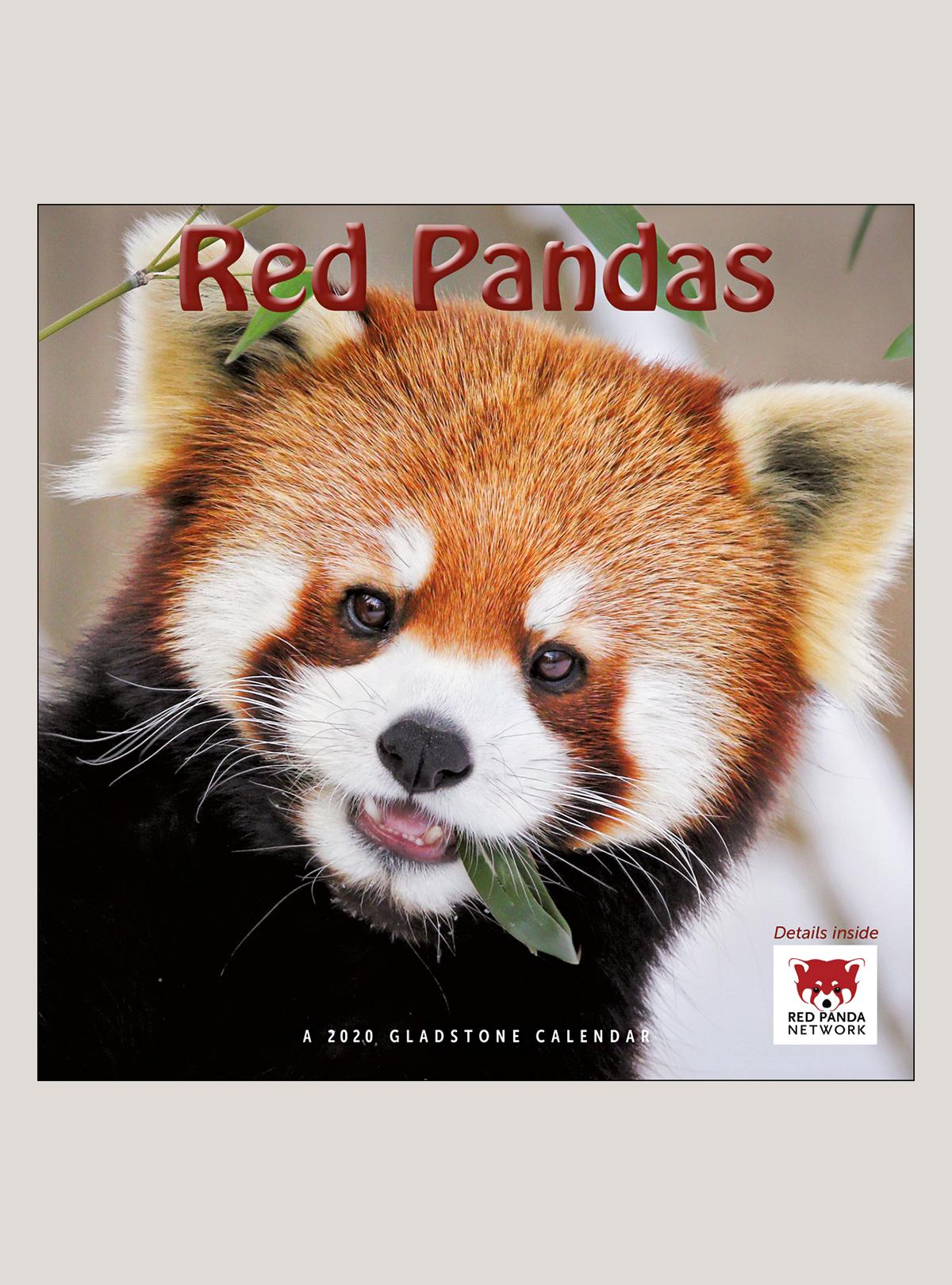 """2020 Red Pandas 12"""" x 12"""" WALL CALENDAR"""