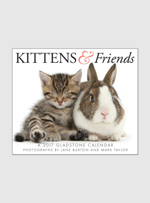 "Kittens & Friends 2017 <br/> 5.25"" x 6.125"" Page Per Day Calendar"