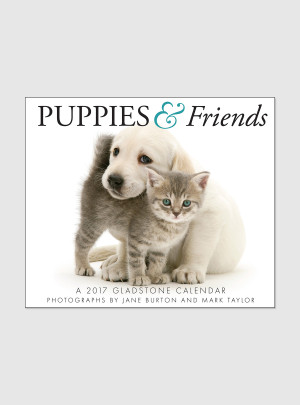 "Puppies & Friends 2017 <br/> 5.25"" x 6.125"" Page Per Day Calendar"