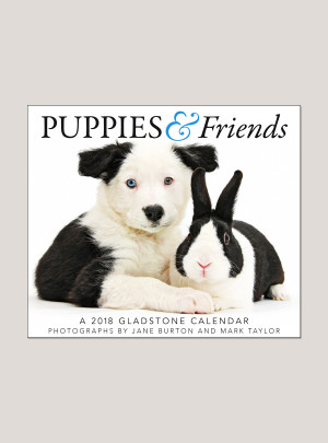 "2018 Puppies & Friends 5.25"" x 4.25"" Page Per Day Calendar"