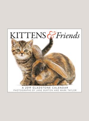 "2019 Kittens & Friends 5.25"" x 4.25"" PAGE PER DAY CALENDAR"