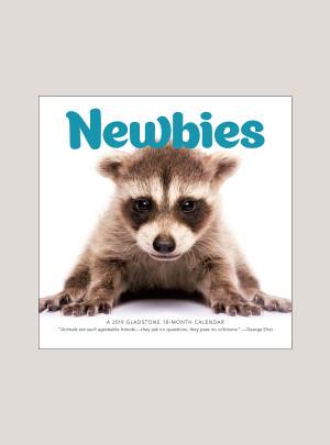"""2019 Newbies 7"""" x 7"""" MINI WALL CALENDAR"""