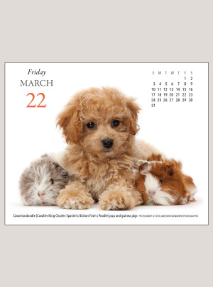 "2019 Puppies & Friends 5.25"" x 4.25"" PAGE PER DAY CALENDAR"
