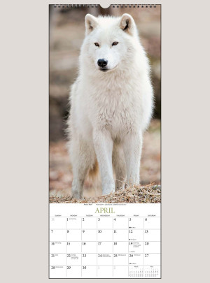 "2019 Wolves 9"" x 22"" VERTICAL WALL CALENDAR"