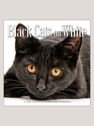 "2020 Black Cats on White 12"" x 12"" WALL CALENDAR"