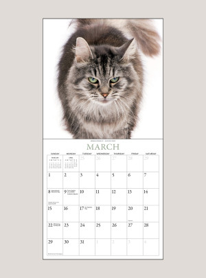 "2020 Cats 7"" x 7"" MINI WALL CALENDAR"