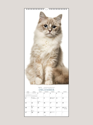 """2020 Cats 9"""" x 22"""" VERTICAL WALL CALENDAR"""