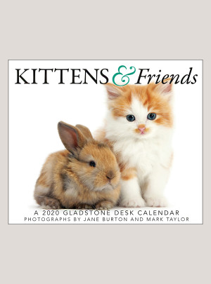 "2020 Kittens & Friends 5.25"" x 4.25"" PAGE PER DAY CALENDAR"