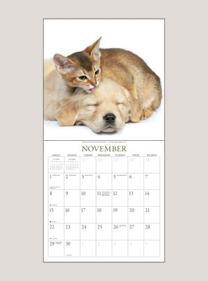 "2020 Kittens & Friends 12"" x 12"" WALL CALENDAR"
