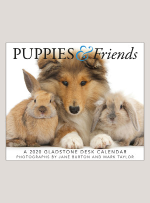 "2020 Puppies & Friends 5.25"" x 4.25"" PAGE PER DAY CALENDAR"