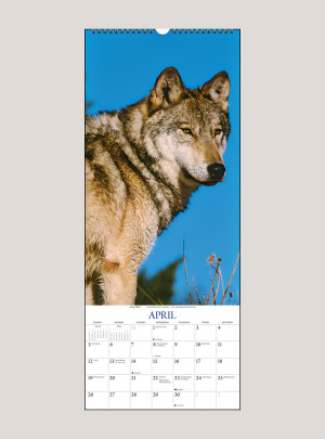 "2020 Wolves 9"" x 22"" VERTICAL WALL CALENDAR"