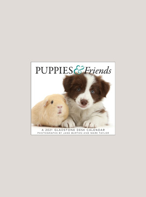 "2021 Puppies & Friends 5.25"" x 4.25"" PAGE PER DAY CALENDAR"