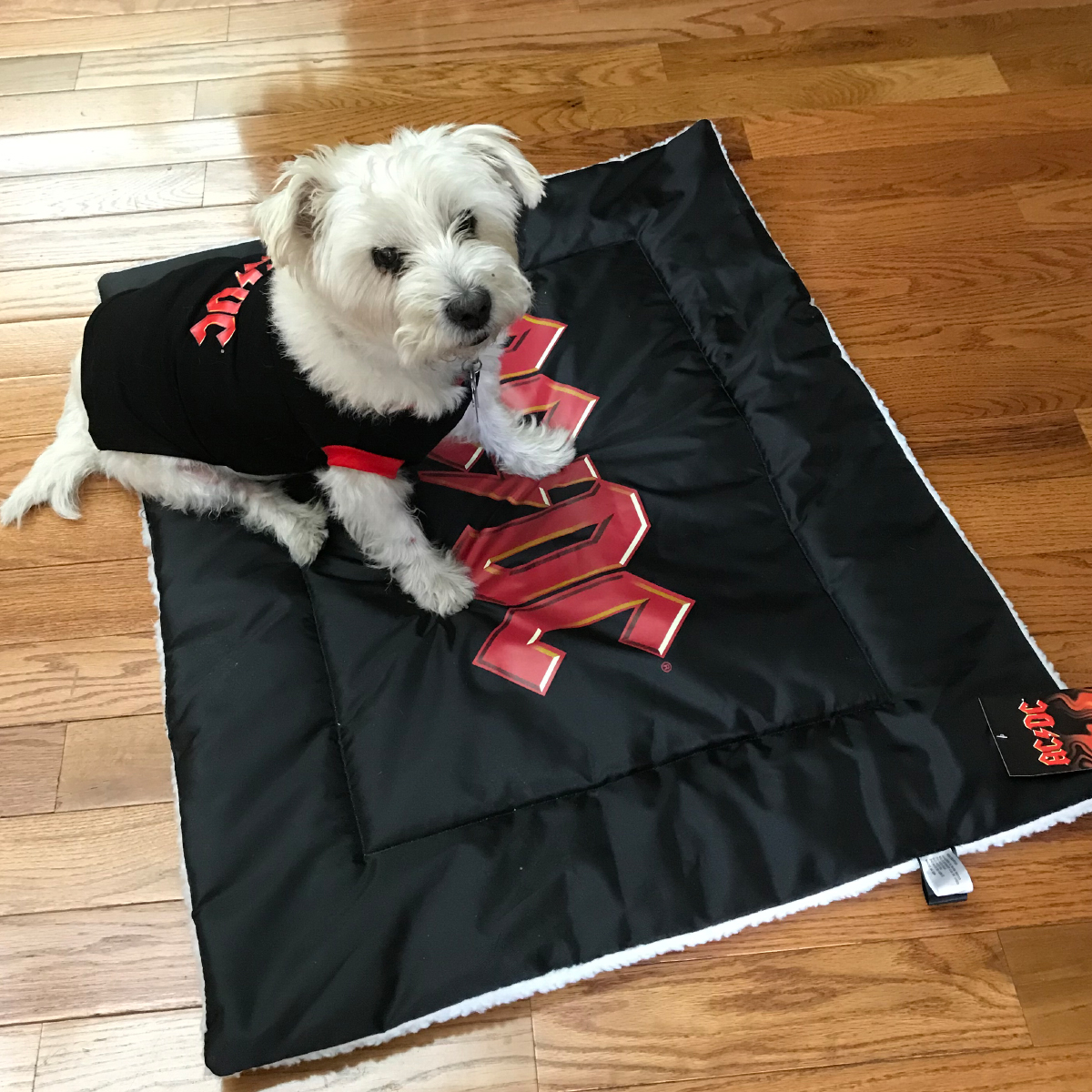 AC/DC Dog Bed Black Red Logo