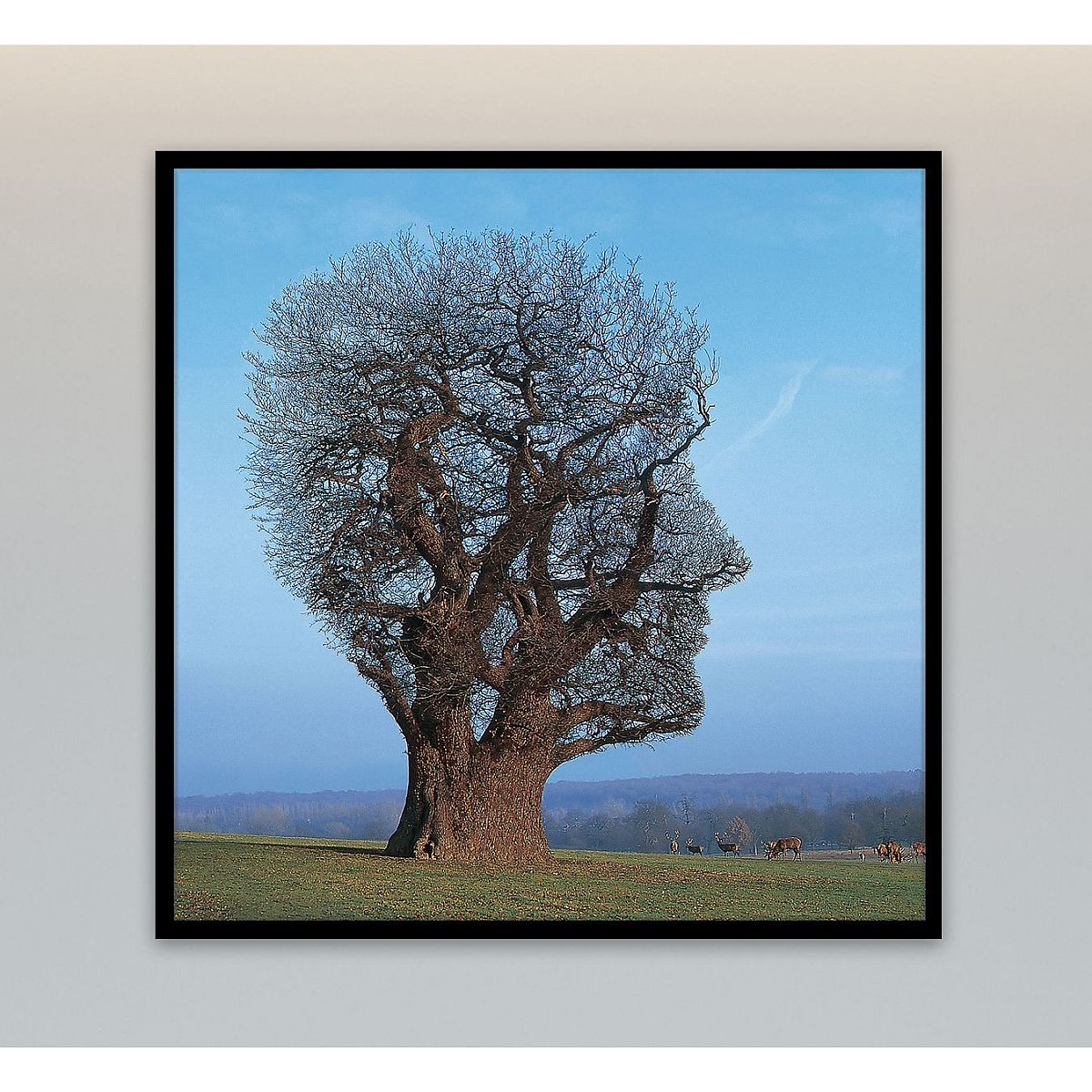 Tree Of Life Canvas Wall Art Shop The Pink Floyd Official Store
