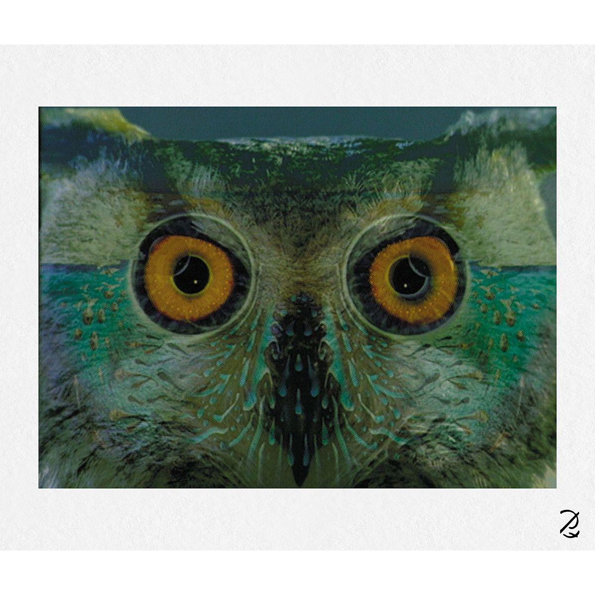 Owl Eyest Fine Art Print