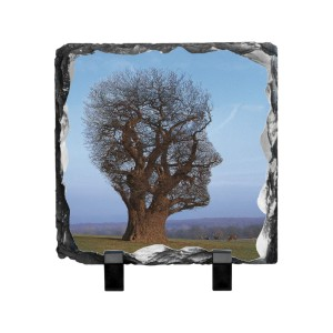 Tree Of Half Life Photo Slate