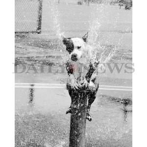 Dog Days of Summer Part 1