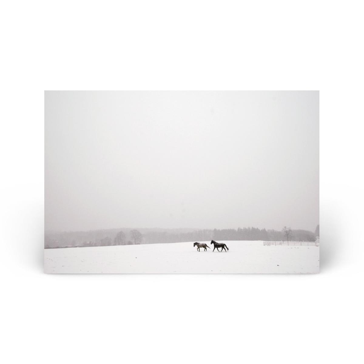 Animals & Wildlife: Snow Horses