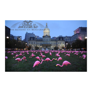 Flamingos at City Hall (2009)