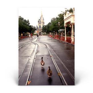 Cinderella's Castle: Ducks!