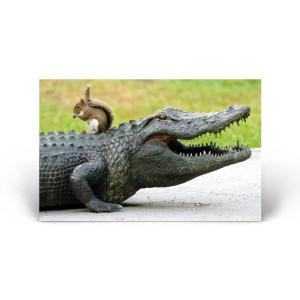 "Florida Wildlife: ""Unlikely Duo"" Squirrel & Alligator"