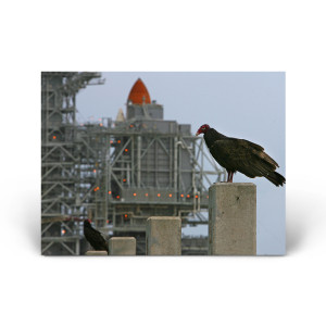 Red Huber: A Pair of Turkey Vultures