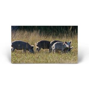 Red Huber: Juvenile Hogs