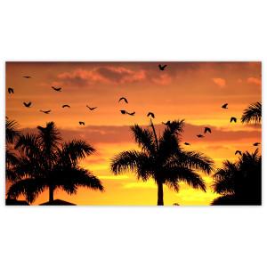 Sunrise & Sunset: Through the Trees