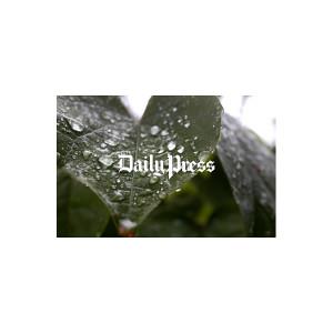 Hampton Roads Scenery: Leaf Rain Drops