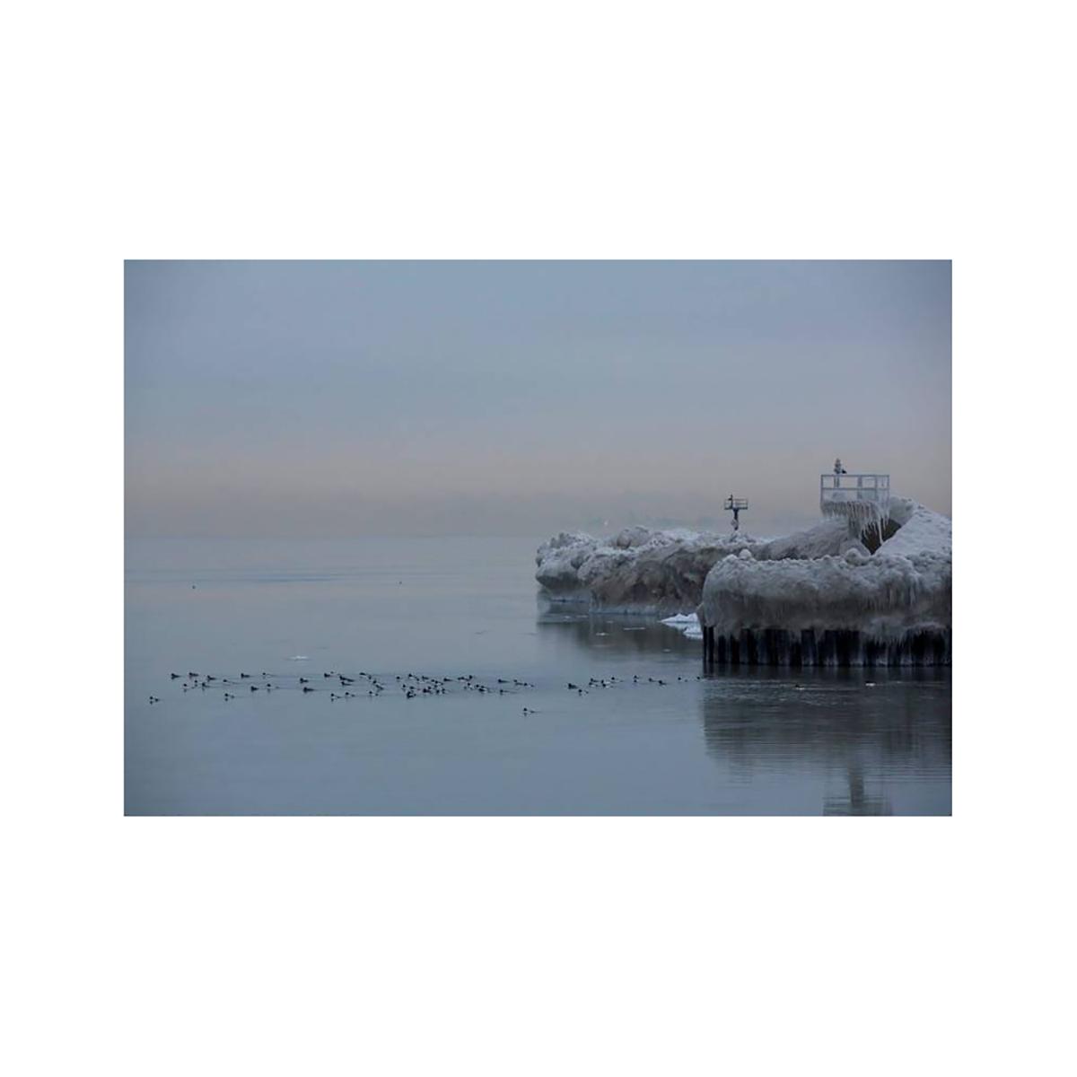 Ducks on Frozen Lake Michigan Photograph
