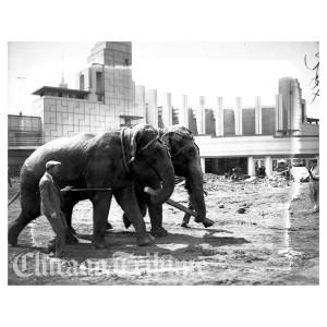 Century of Progress - Elephants (1932)