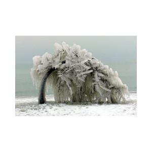 Icy Tree by Lake Michigan Photograph