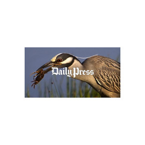 Hampton Roads Scenery: Yellow-Crowned Night Heron