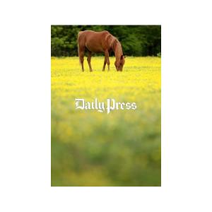 Hampton Roads Scenery: Horse in Newport News