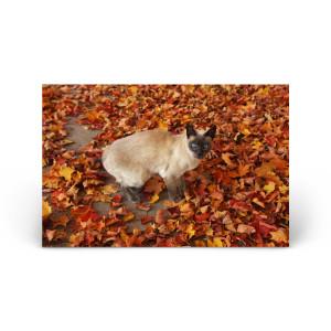 Animals & Wildlife: Fall Foliage