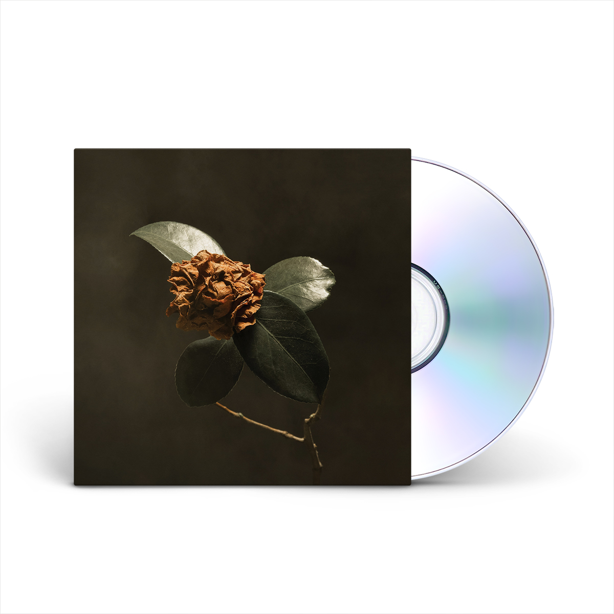St. Paul & The Broken Bones - Young Sick Camellia CD