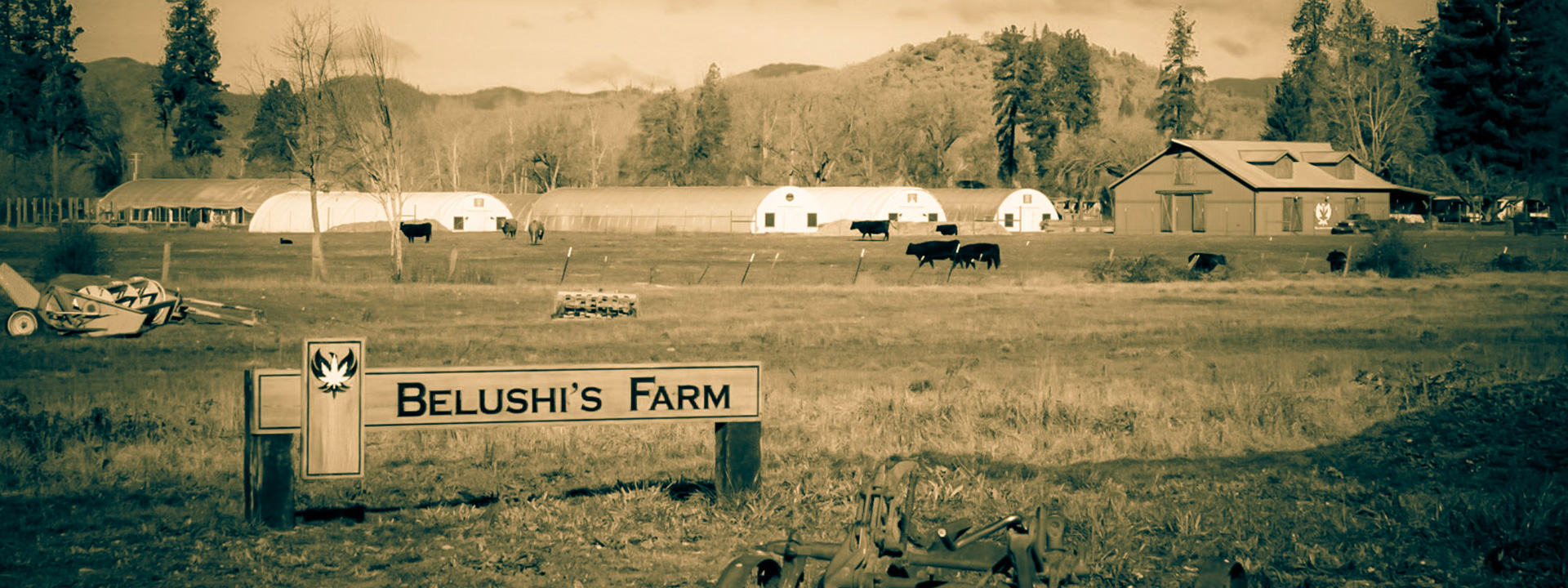 Welcome to the Belushi's Farm store. The spirit of home grown. Shop now.