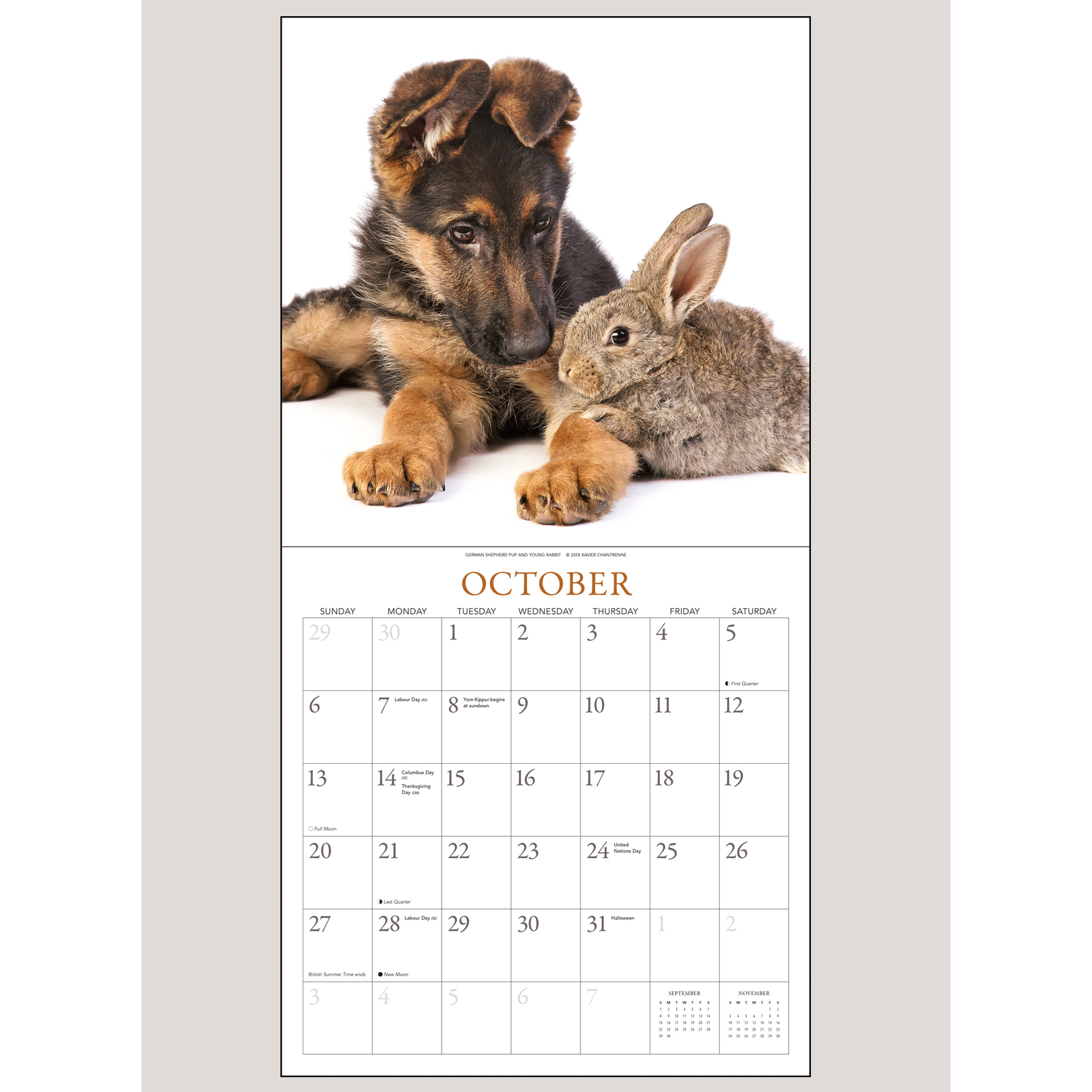 "2019 Puppies & Friends 12"" x 12"" WALL CALENDAR"