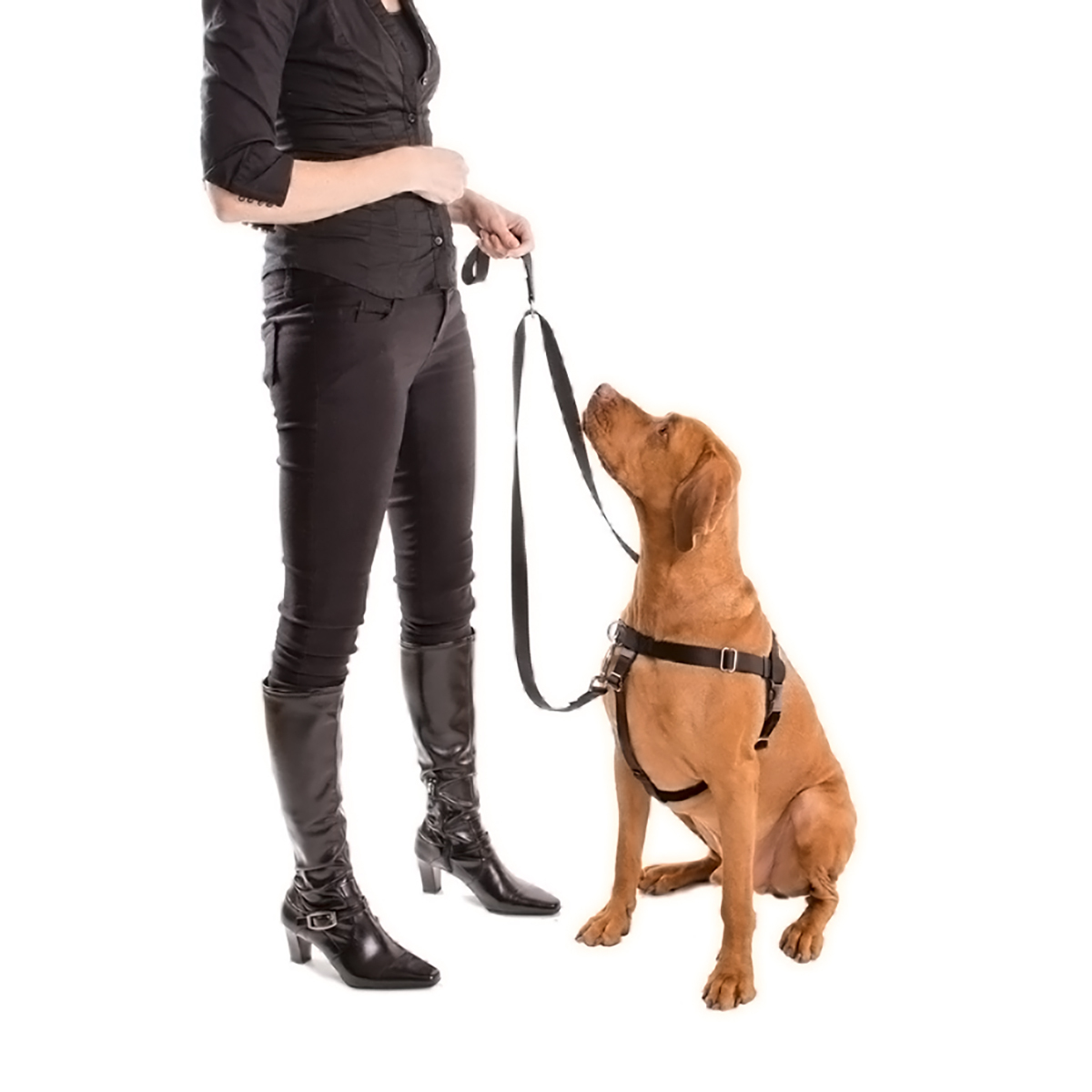 Teaching Your Dog To Walk Without A Leash