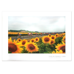 2005 Tour de France - Sunflowers Mini Poster