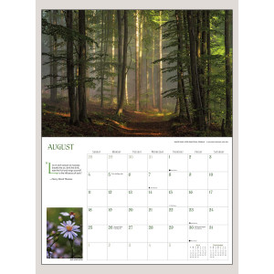 "2019 Into the Woods 12"" x 18"" DELUXE WALL CALENDAR"