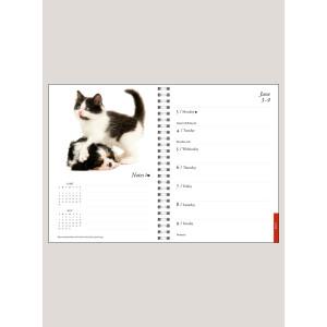 """2019 Kittens & Friends 6"""" x 8.25"""" ENGAGEMENT CALENDAR"""