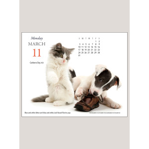 "2019 Kittens & Friends 5.25"" x 4.25"" PAGE PER DAY CALENDAR"